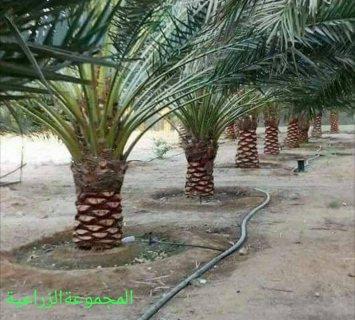 إستثمار مساحة زراعية خصبة 750 فدان بالسودان  ولاية نهر النيل