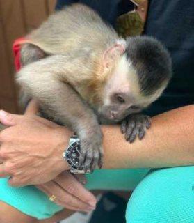 حفاضات القرد نظيفة للغاية