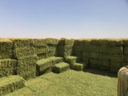 يوجد  كميات برسيم حجازي بلات ٤٥٠كيلو داخل الدولة (الامارات العربية المتحدة)