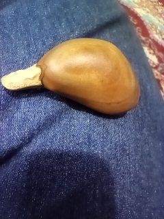حجر نيزك نادر جدا
