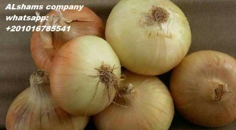 golden onions