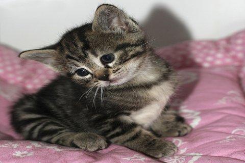 نخفيض رائع بسعر القطط الشيرازيات
