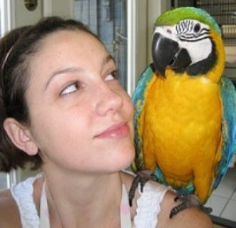 Macaw Parrot for Sale