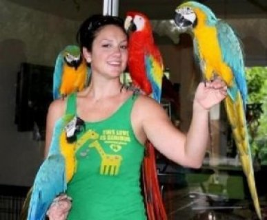 Macaw Parrots for Adoption Now