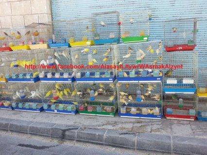 مورد للطيور الشامية
