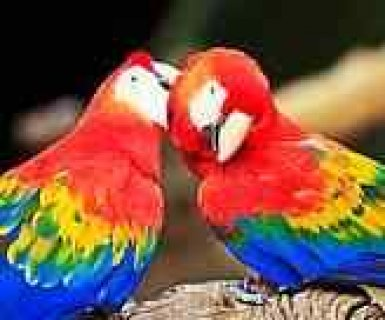Home trained parrots birds and eggs for sale.just recently abund