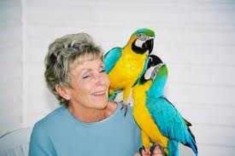 Tame and talking Blue and Gold Macaw Parrots For Sale