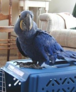 Macaw Birds for Adoption