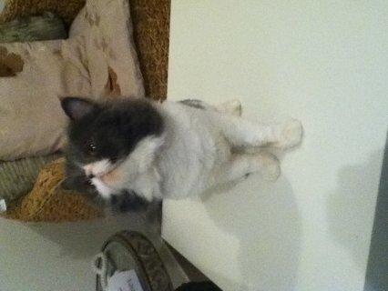 قط زكر مون فيس