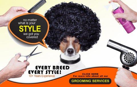 متخصص في تنظيف وتزيين وقص شعر الكلاب والقطط و بتوفر خدمة منزلية