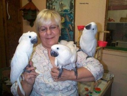 WELL TRAINED cockatoo PARROTS FOR A GOOD HOME,