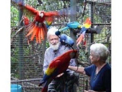 Parrots, Macaw Birds and fertile Eggs