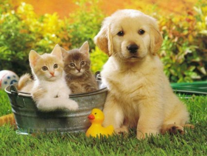 healthy pet food