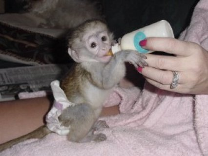 Self-Assured Capuchin Monkeys  They are very self-assured in tha
