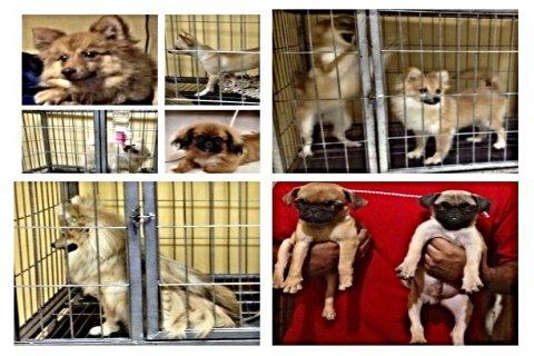 كلاب الزينه للبيع