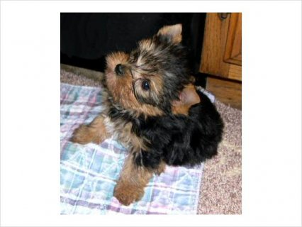 cute pets adoption