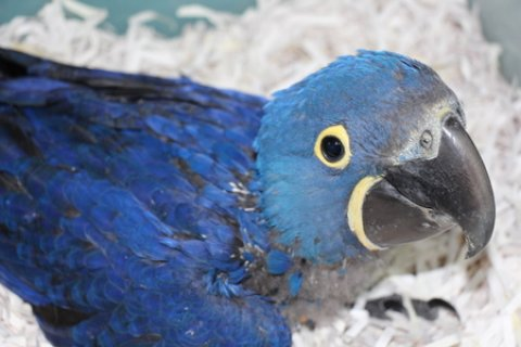Hi, and thanks for looking at our ad Macaw
