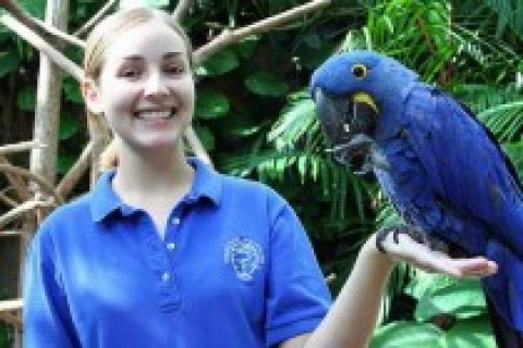 Talking Hyacinth macaws for rehoming