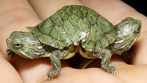 Cute tortoises Available For Sale.