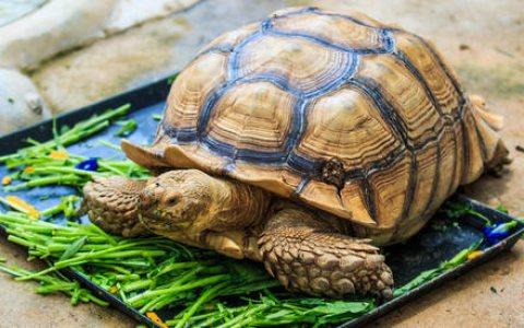 Playful tortoises For Sale