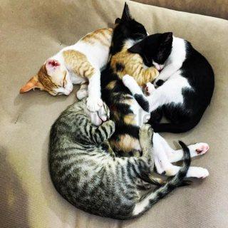 kittens free adoption