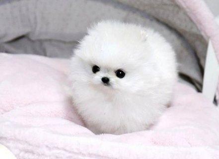 صغير الكلاب الجميلة المتاحة