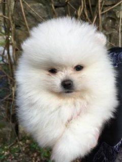 فناجين فنجان كلب صغير صغير للبيع
