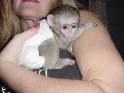 y...Male and female Capuchin monkeys for sale