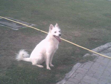 صورة الأولى كلب