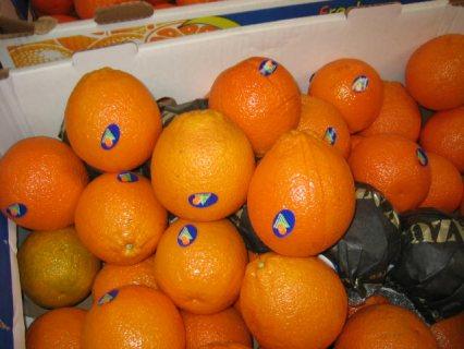 برتقال مصري طازج بجودة عالية