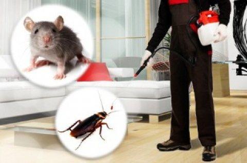خدمات مكافحة حشرات الشارقة 0566511084 الفردوس