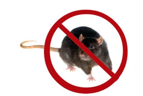 شركة مكافحة الفئران بعجمان | 0567540424 التميز