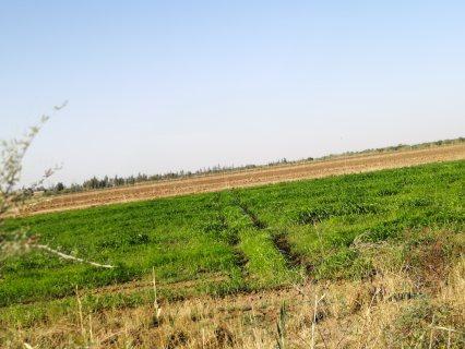 اراضي زراعية ممتازة للمستثمرين في السودان