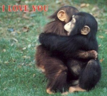 Amazing 2 Monkey Chimpazee For Adoption