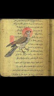 A seven Century manuscript