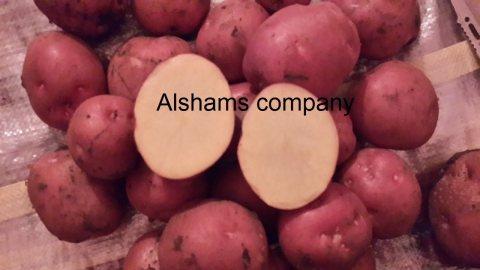 بطاطس طازجه بجوده عاليه