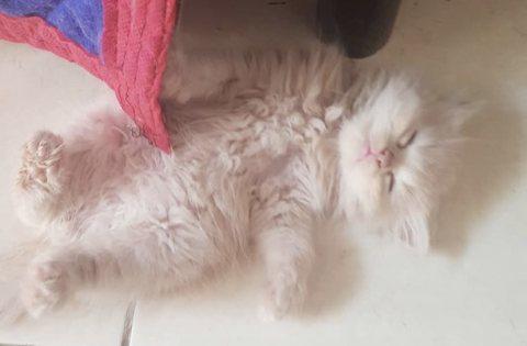 قطة كيتن لعوبة و مرة كيوت