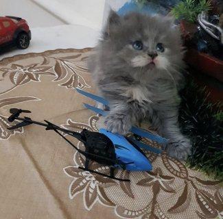 قطة كيتن لعوبة و كيووت
