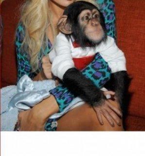 أنثى مسجلة كابوتشين القرد.