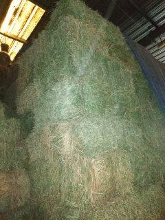 رودس سوداني نخب اول وزن ٥٠٠ كيلو جرام