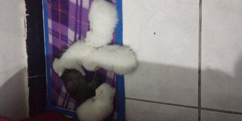 Five lovely cute kittens for sale