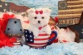 Playful Teacup Maltese Puppies for Sale