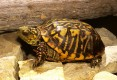 Home Trained tortoises Available For Sale