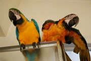 We have Awesome parrots we want to give out