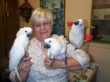 cockatoos that urgently need a home