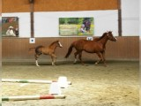 Outstanding Male Horse for Sale