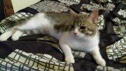 قط  جميل من اب انغوري وام شيرازية هادئ جدا  و ذكي للبيع في أبوظبي