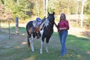 Raiding mare and gelding Horse For sale