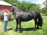 ممتاز الذكور والإناث الحصان للبيع المتاحة.
