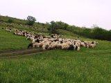 تصدير الاغنام من اروبا الى اي دولة عربية